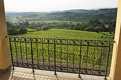 View of the vineyards under the chateau
